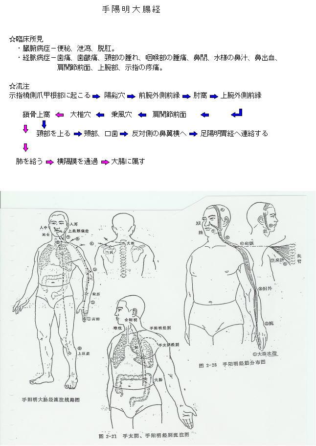 手陽明大腸経流注図