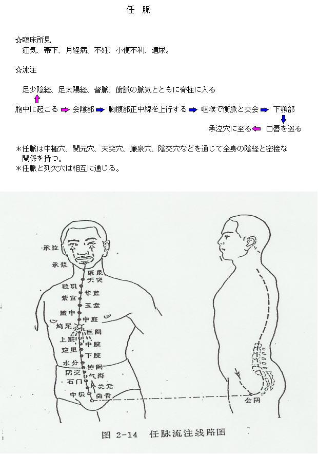 任脈の流注図