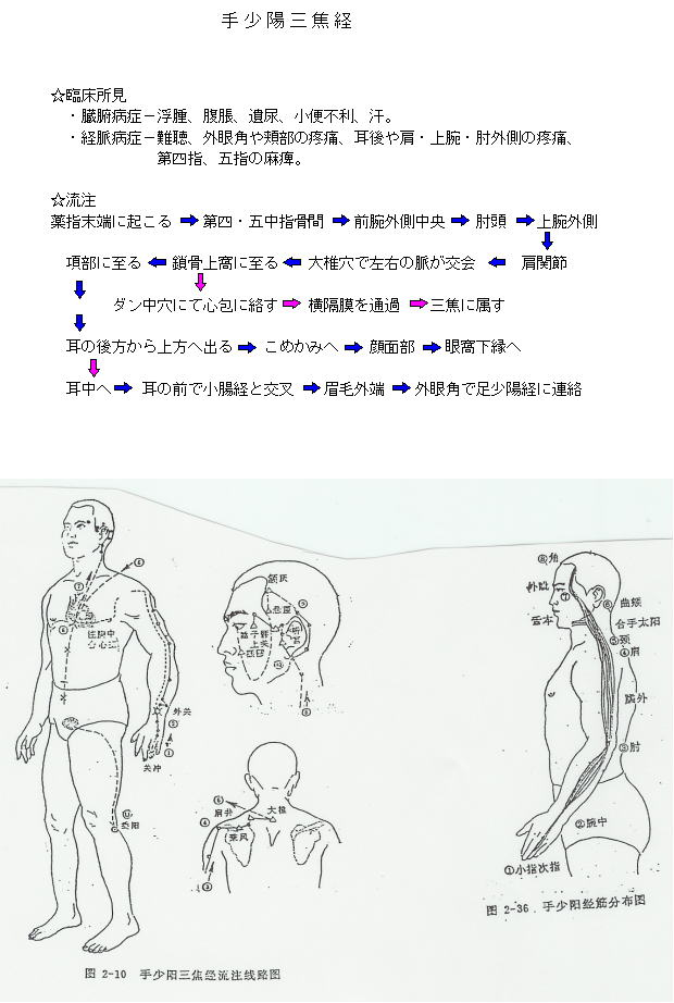 手少陽三焦経の流注図