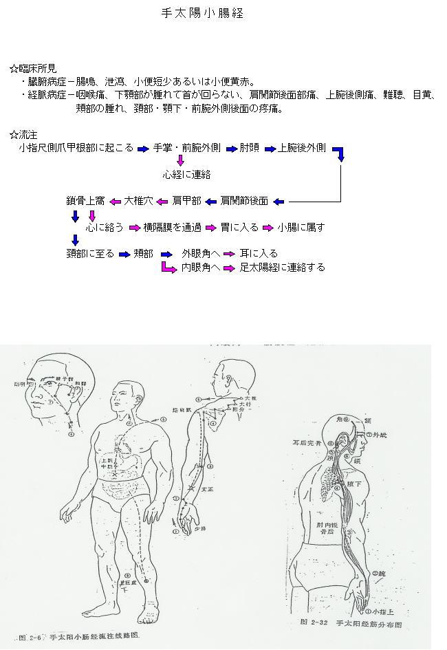 手太陽小腸経流注図