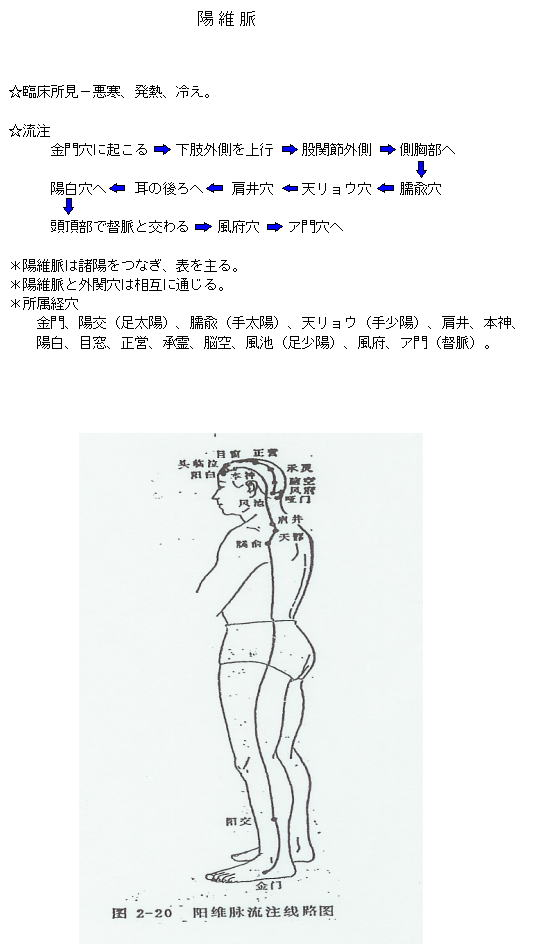 陽維脈の流注図